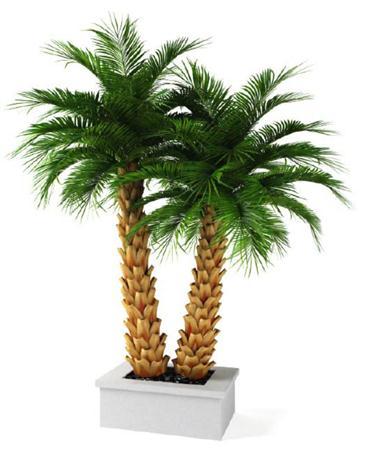 椰子树盆栽