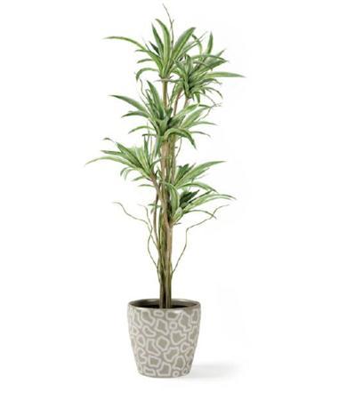 观赏盆栽模型