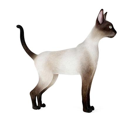 暹罗猫 Siamese