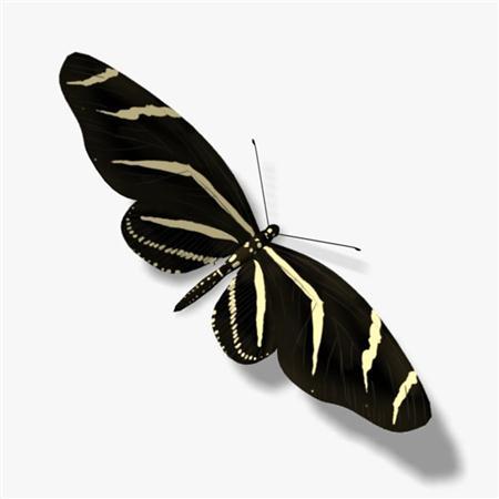 斑纹蝶 Zebra Butterfly
