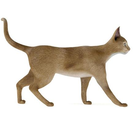 小黄猫 行走