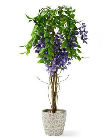 树盆栽 紫花