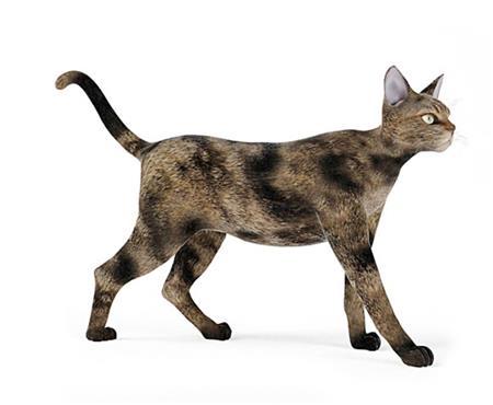 猫 cat 漫步