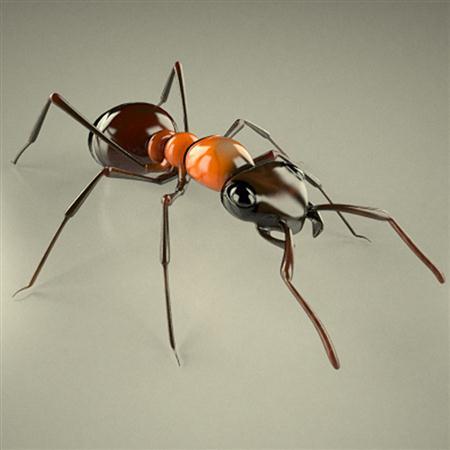 红蚁 formica rufa