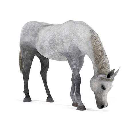 马 Horse 吃草