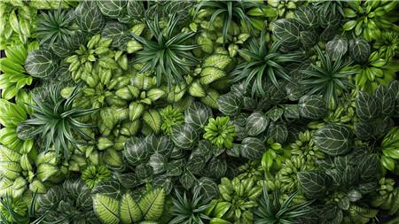 植物 Fitostena