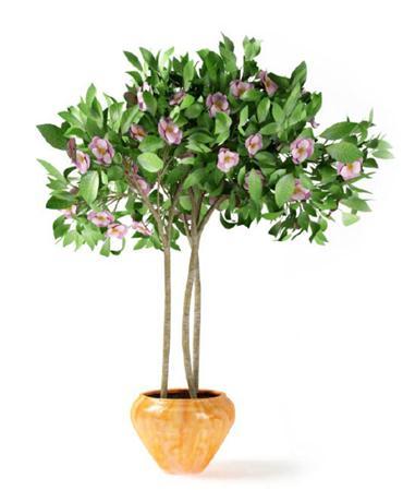 小树盆栽模型