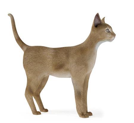 家猫 cat