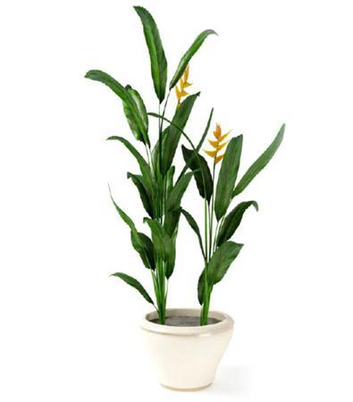 漂亮的盆栽模型