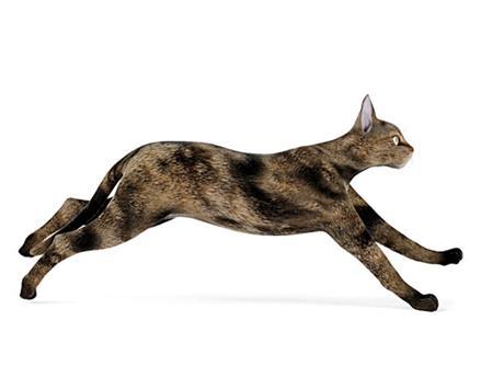 猫 cat 抓捕